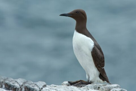 A blob of hot water in the Pacific Ocean killed a million seabirds, scientists say