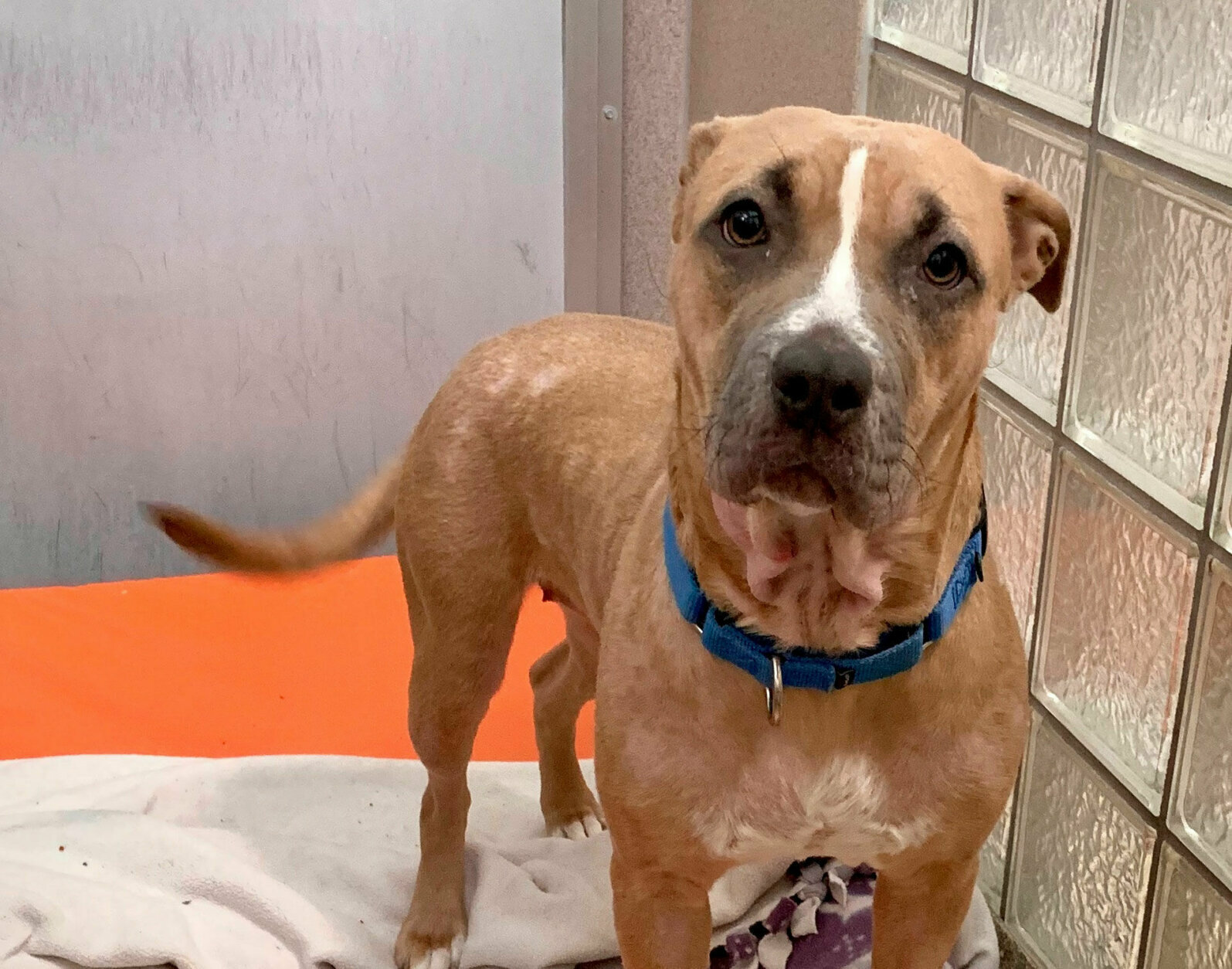 <p><strong>Pet of the Week: Jasmine</strong></p> <p>Jasmine has been getting lots of love, treats and attention from the staff at Humane Rescue Alliance and is starting to come out of her shell. She would be best matched with a patient family, who can go slow and help her build up her confidence. She&#8217;s a quick learner, and once she gets comfortable, she&#8217;s sure to be a sweet princess with her favorite people!</p>