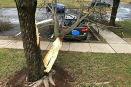 <p>Damage from the Friday storm in Leesburg, Virginia.</p>