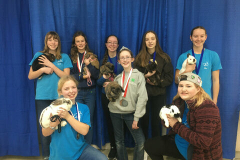 A hoppy ending: Loudoun County Rabbit Hoppers take top prizes at rabbit convention