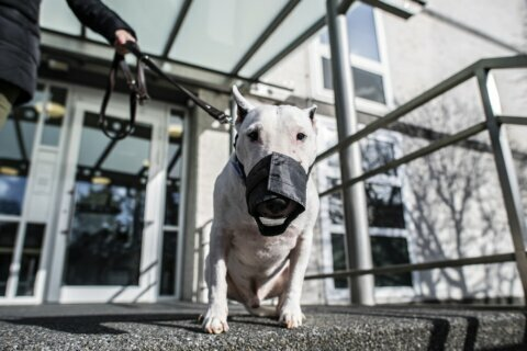 No Bull: German court rules dogs not too big to be miniature