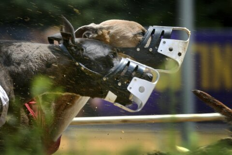 Bid to ax greyhound racing funds rejected in West Virginia