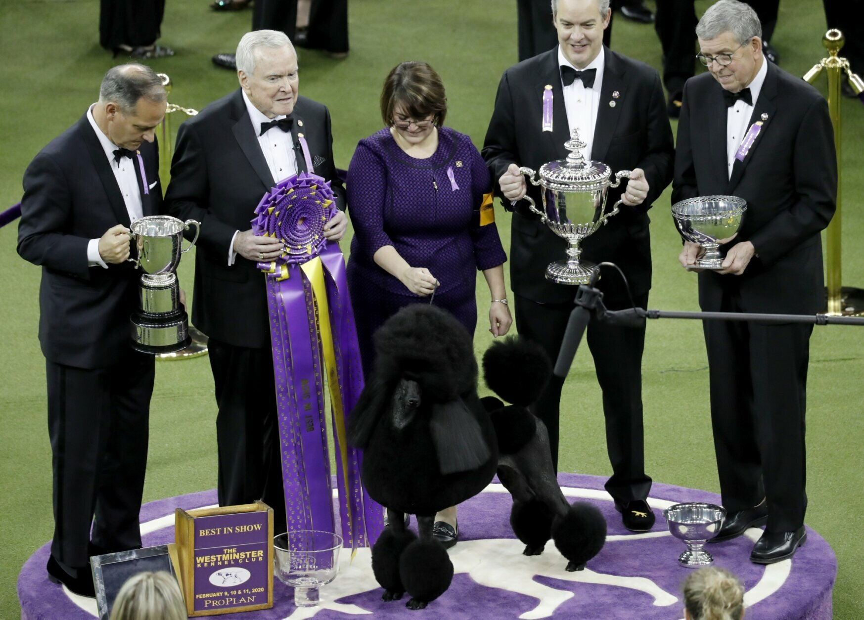2020 westminster dog show winners
