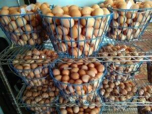 eggs whiffletree farm