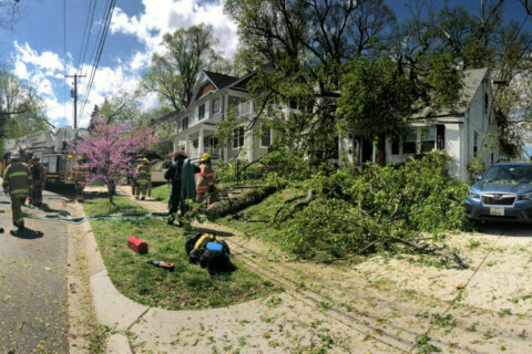 Man rescued after large tree falls through Md. house