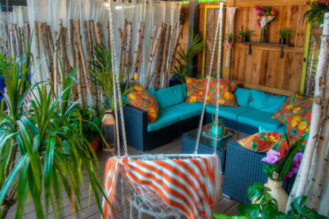 'Tropical paradise respite' in the middle of DC