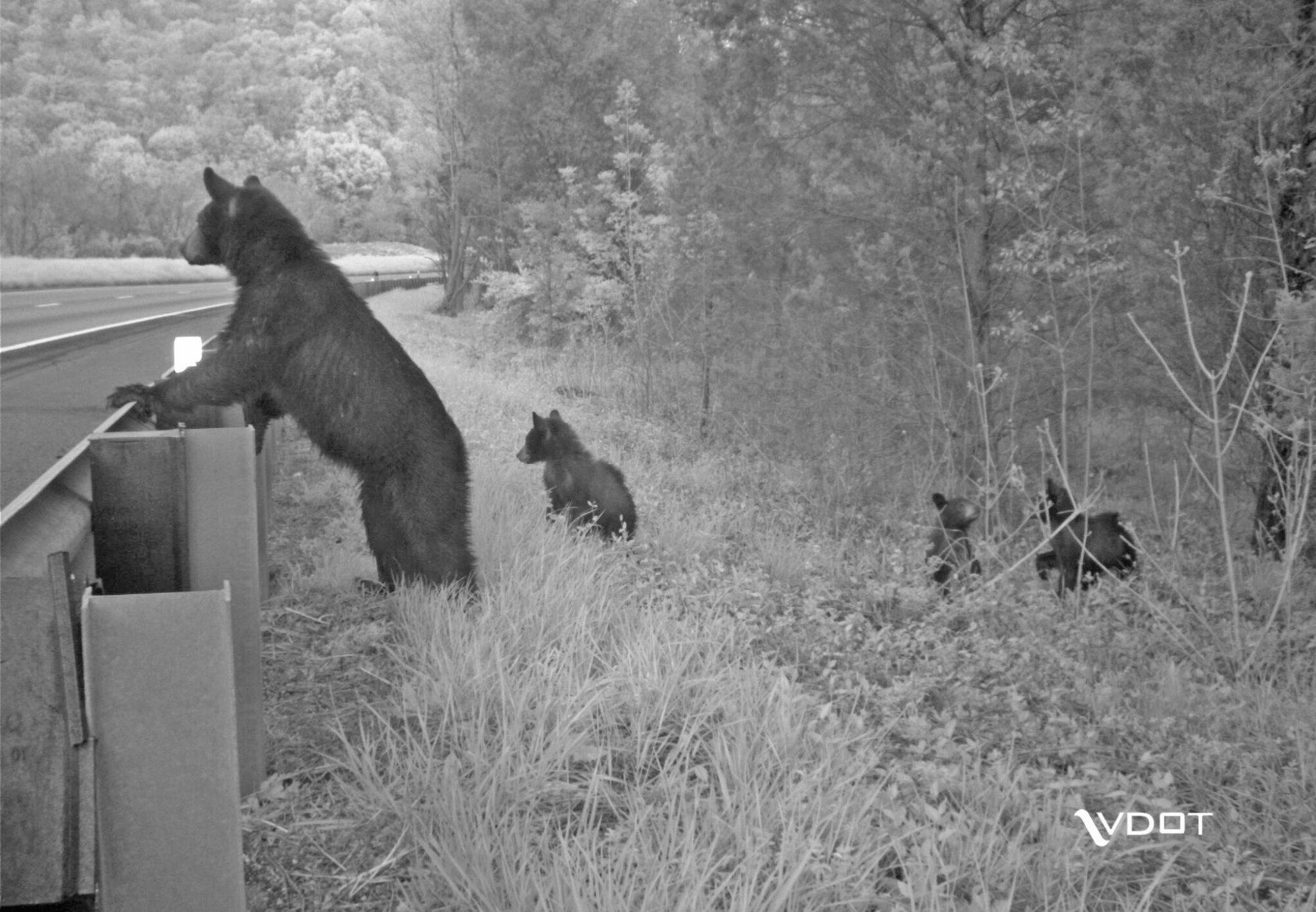 Virginia wildlife and transportation experts make effort to...