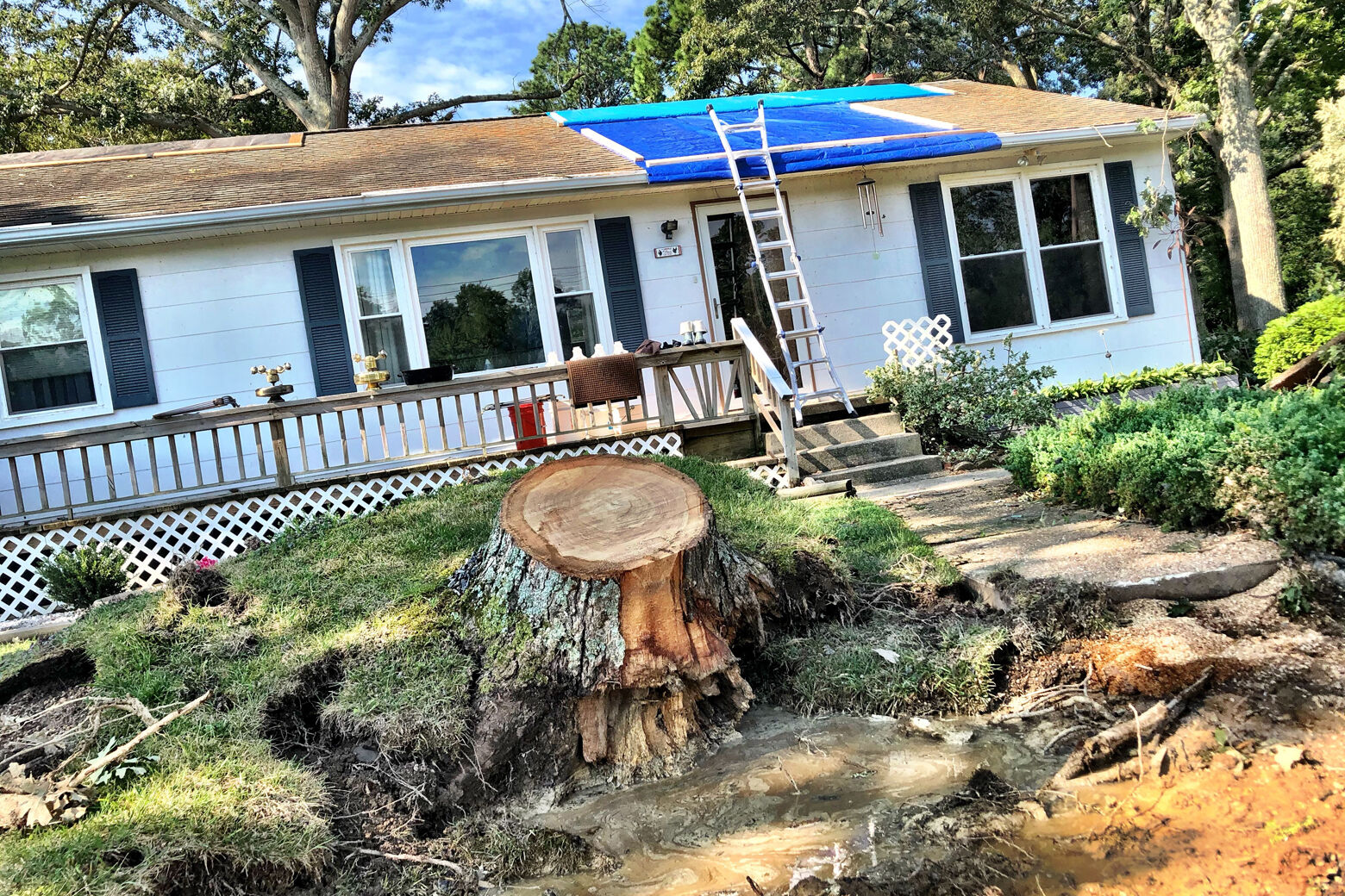 Tornado cleanup: Good things come from bad