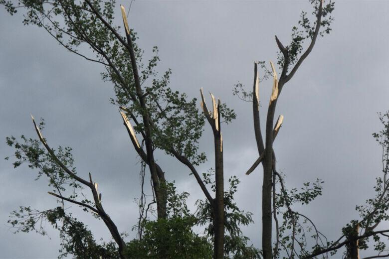 Edgewater tornado trees sheered