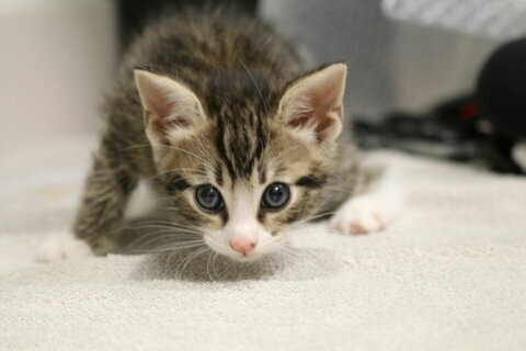 Office of Animal Services updates Montgomery Co. council on pandemic pet adoptions, fostering
