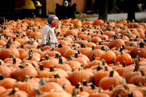 Looking for fall fun? Check out these pumpkin patches