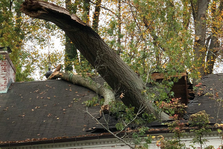 Large tree limb falls on Chevy Chase home,...