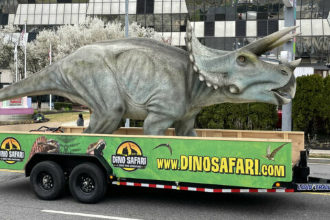 Life-sized dinosaur drive-by brings joy to Children's National Hospital patients