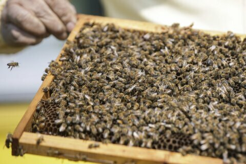 It's your last chance to apply to be a beekeeper in Virginia