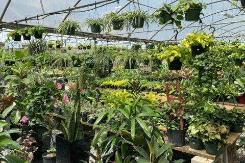 Silver Spring events-based plant business finds success expanding to retail during pandemic