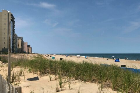 Search continues for missing Ocean City swimmer
