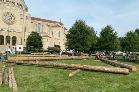 It worked 800 years ago: CUA students building replica of Notre Dame roof truss using medieval techniques