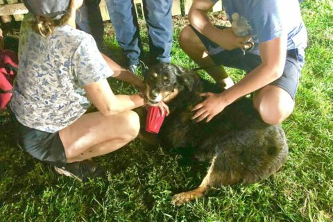 Runaway dog rescued by Montgomery Co. firefighters after falling in well