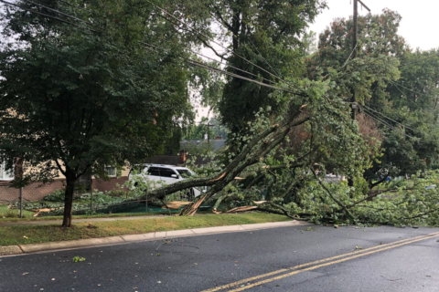 Snapped trees, hail reported in part of Va. as warm weather returns Friday
