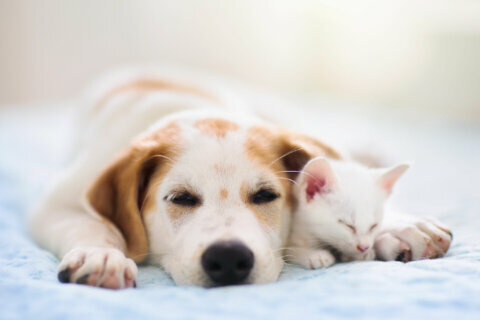 2 Maryland pet stores banned from selling puppies