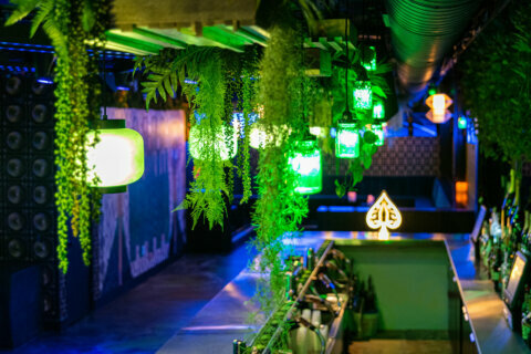New DC nightclub Sachi 'a place to kind of get lost'