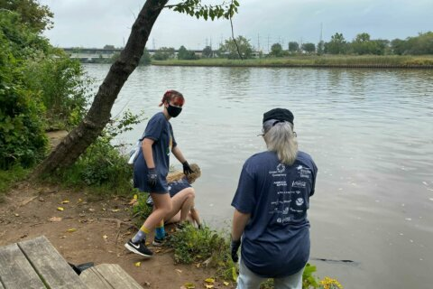 Hundreds head to Kingman Island for annual cleanup